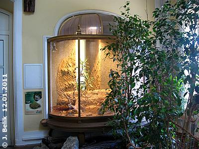 Das Terrarium der Grabfrösche (gleich neben Ausgang Savanne), 12. Jänner 2010