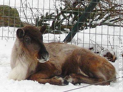 Olga, 2. Dezember 2010
