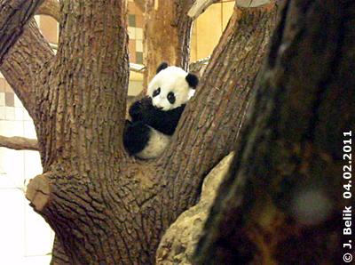 Fu Hu, 4. Februar 2011