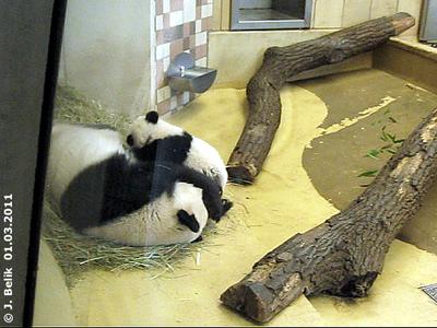 Fu Hu an der Milchbar, 1. März 2011 8Screenshot aus Video)