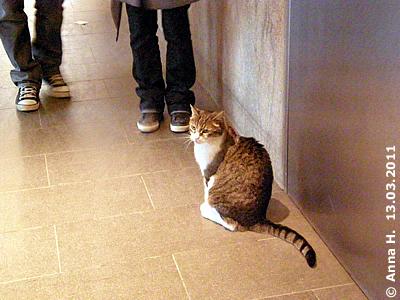 Jerry im Großkatzenhaus, 13. März 2011