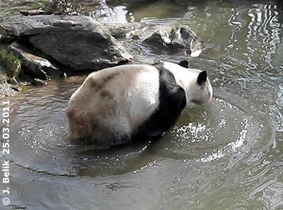 ... ich geh wieder raus! Long Hui, 25. März 2011