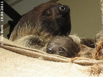 Mama Alberta mit ihrem Baby, 19. April 2011