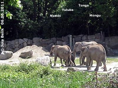 Numbi, Mongu, Tuluba und Tonga, 6. Mai 2011 (Screenshot von Video)
