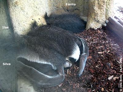 Ilse, Emilia und Silva, 26. Mai 2011