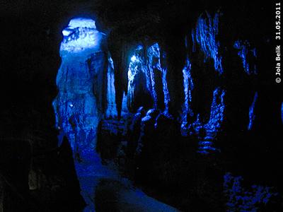 In der Höhle der Brillenblattnasen, 31. Mai 2011