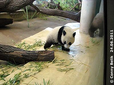 ... so kann Yang Yang nur noch weg gehen. Und was macht der kleine Fratz?