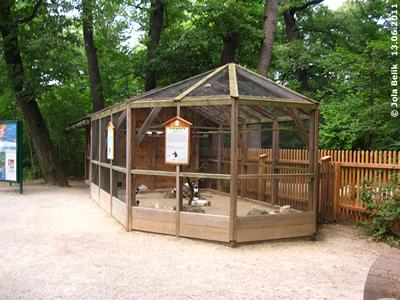 Das Zuhause der Seidenhuhn-Küken und der Ganselkröpfer, 13. Juni 2011