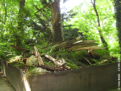 Die Käfer-Kiste, 13. Juni 2011
