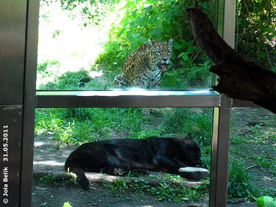 Warten auf die Jause, Sheila und Conny (schwarz), 31. Mai 2011