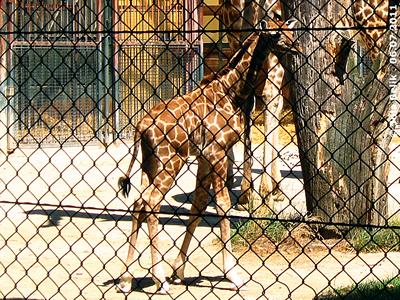 Baby Arusha, 6. Juli 2011