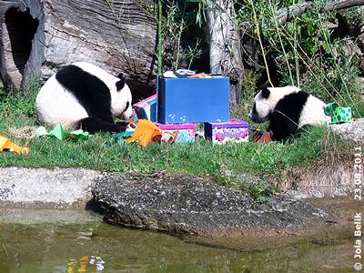 Fu Hu und Yang Yang, 23. August 2011