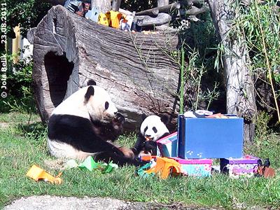 Das schmeckt lecker! Fu Hu und Yang Yang, 23. August 2011 (Screenshot von Video)