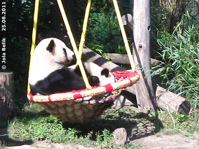 Yang Yang mit Fu Hu, 25. August 2011
