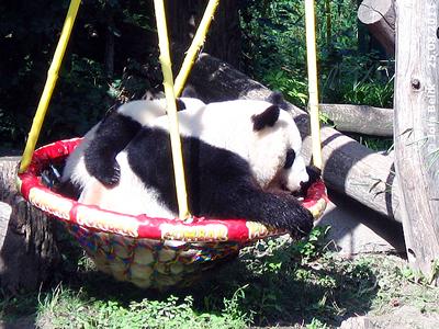 So lieb und brav kann das Baby Monster auch sein! Fu Hu und Yang Yang, 25. August 2011