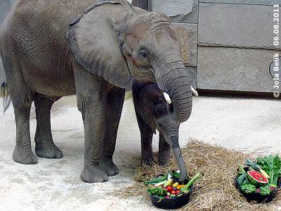 Tuluba und Mama Numbi, 6. August 2011