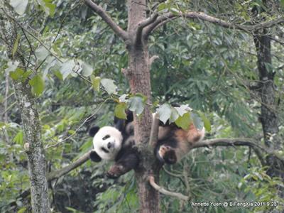 ... beim Herumkasperln in luftiger Höhe! Bi Feng Xia, 23. September 2011