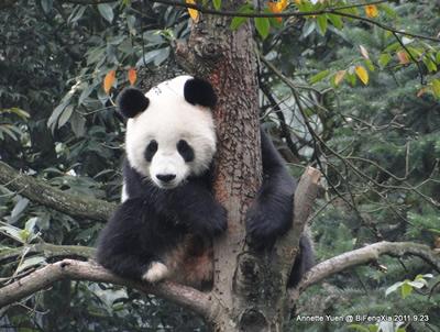 Grüße von Fu Long! Bi Feng Xia, 23. September 2011