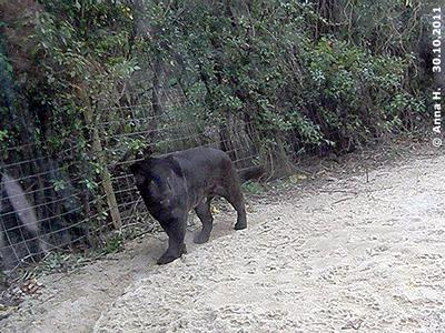 Bonita traut sich auch schon bis zum Glas zu gehen und sich auch die Besucher anzuschauen, 30. Oktober 2011