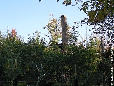 Baby Monster Fu Hu auf seinem neuen Lieblingsschlafplatz! 18. Oktober 2011