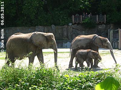 Kibo (re) mit Mama Numbi (li) und dem kleinen Bruder Tuluba, 6. Mai 2011