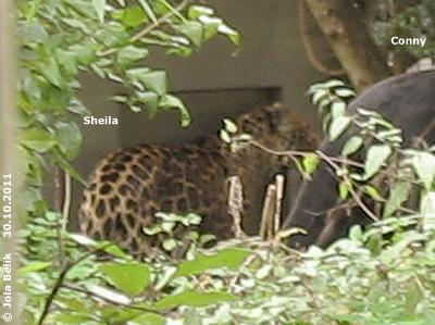 Conny und Sheila beobachten genau, was sich hinter dem Zaun abspielt! 30. Oktober 2011