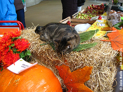Lilly mitten im Trubel ..., 30. Oktober 2011