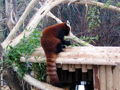 ... sit sowas von sauer, iiiihhh, brrrr! Panda-Weibchen, 23. November 2011