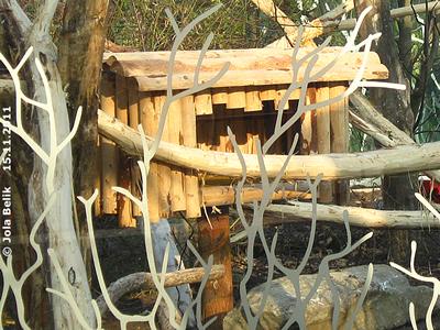 DIe kleine Holzhütte in der neuen Katzenbär-Anlage, 15. November 2011