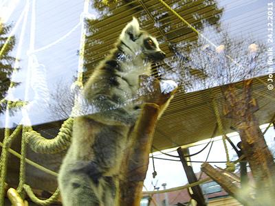 Im Kattahaus ist dieses Kerlchen eingezogen, 23. Dezember 2011