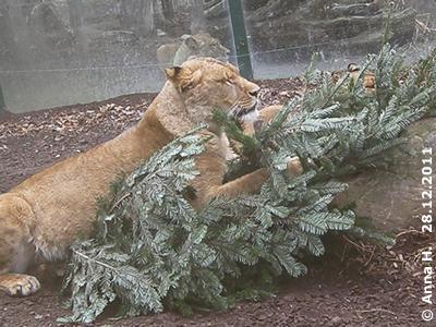 Das riecht sooo gut und es ist meins, meins, meins! Löwen-Mädl, 28. Dezember 2011