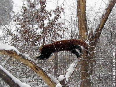 """Das kann man aber nimmer als """"klettern"""" bezeichnen! Mahalia, 17. Jänner 2012"""