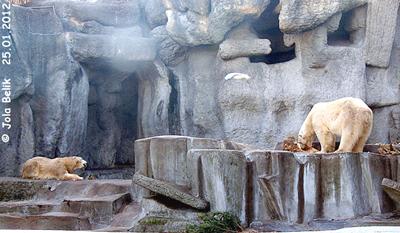 Tania (li) und Vitus (re), Zoo Budapest, 25. Jänner 2012