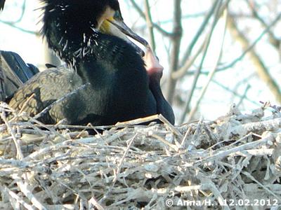 In einem Nest ....