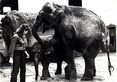 Geli mit den beiden Tierkindern Bimbi (Mitte) und Mary (re), 1972