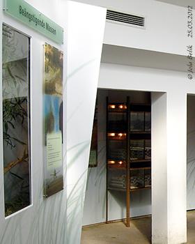 Blick auf dien Schaukasten mit der Heimchenaufzucht (hinten), Wüstenheuschrecken (re), 25. März 2012