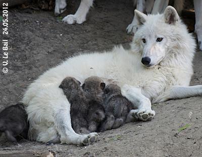 Inja mit einigen ihrer sechs Zwergerl, 24. Mai 2012