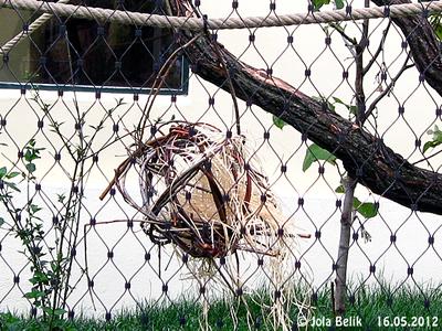 Auch die Totenkopfäffchen stehen auf Weidenkugeln! 16 Mai 2012