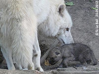 Mama Inja mit einem ihrer entzückenden Winzlinge, 23. Mai 2012