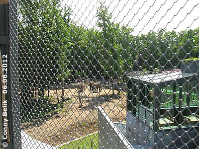 Blick auf die AUßenanlage der Asiatischen Elefanten vom Dach der Grünen Pyramide aus, Sóstó Zoo,. 6. Juni 2012