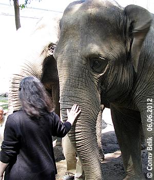 Motki, Sóstó Zoo, 6. Juni 2012 (Danke schön - köszönöm szépen!)