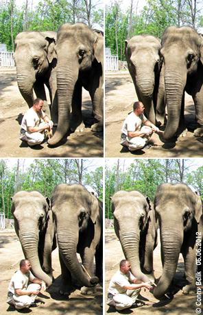 Yasmin (li) und Tanya (re), so vergeht die Wrterei schneller! Sósto Zoo, 6. Juni 2012