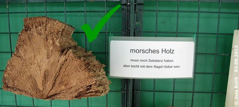 Morsches Holz als Insektenhotel, 3. August 2012