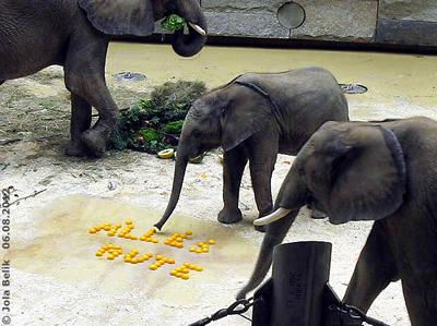 Tuluba mußte auch die Orangenhälften kosten, die haben aber dem großen Bruder Kibo viiieeel besser geschmeckt! 6. August 2012