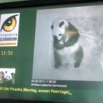 Video Infocenter