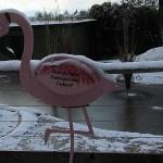 Tafel Flamingos