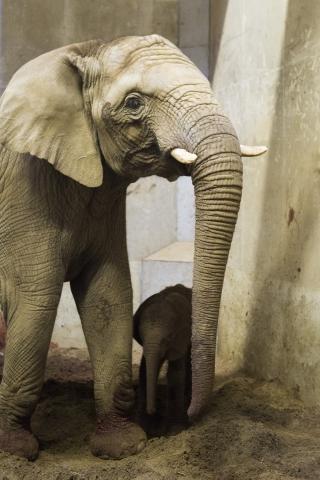 Kwanza und Baby