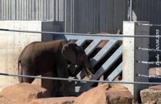 Kibo und Safari