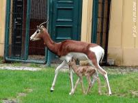 Baby #2 mit Mama