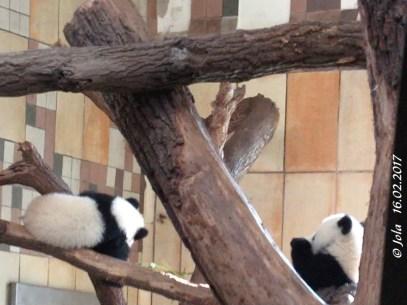 Fu Ban und Fu Feng
